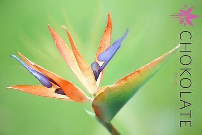 Wafer Paper Flower:  Bird of Paradise - Strelitzia - Cake by ChokoLate