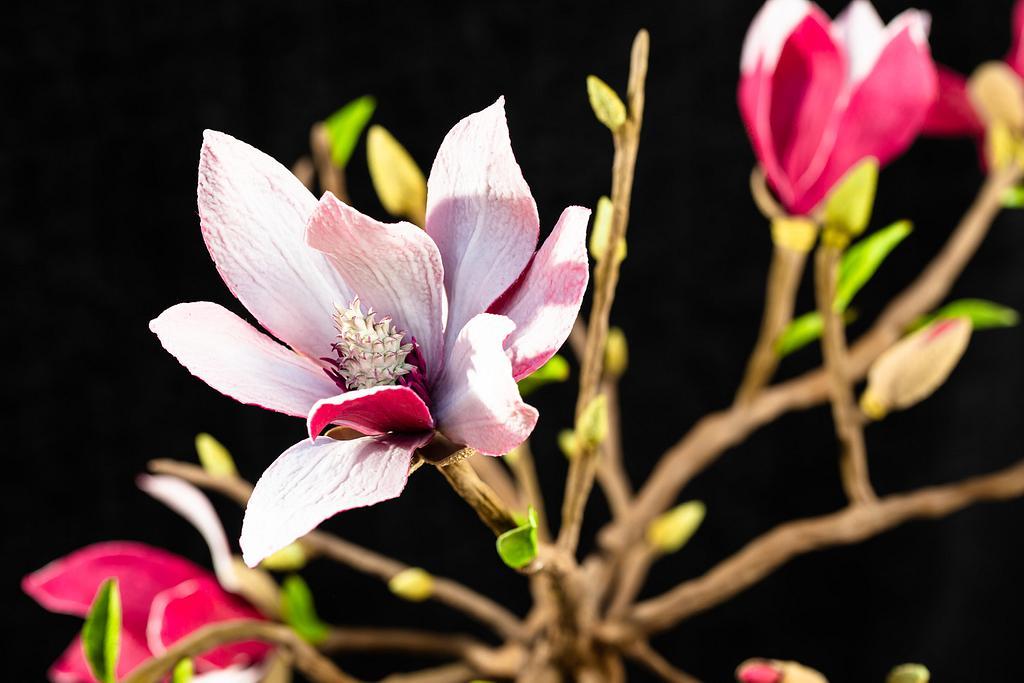 Magnolia 😍 by Erika Amelia Ersek