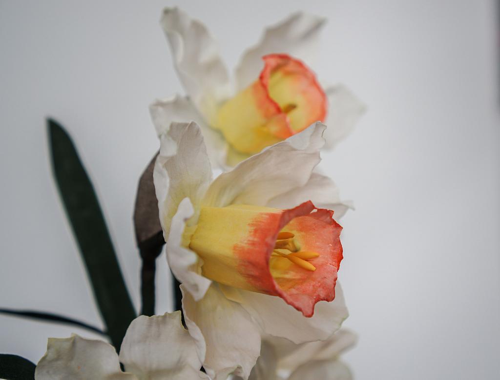 Wafer Paper Daffodils by Anna Astashkina