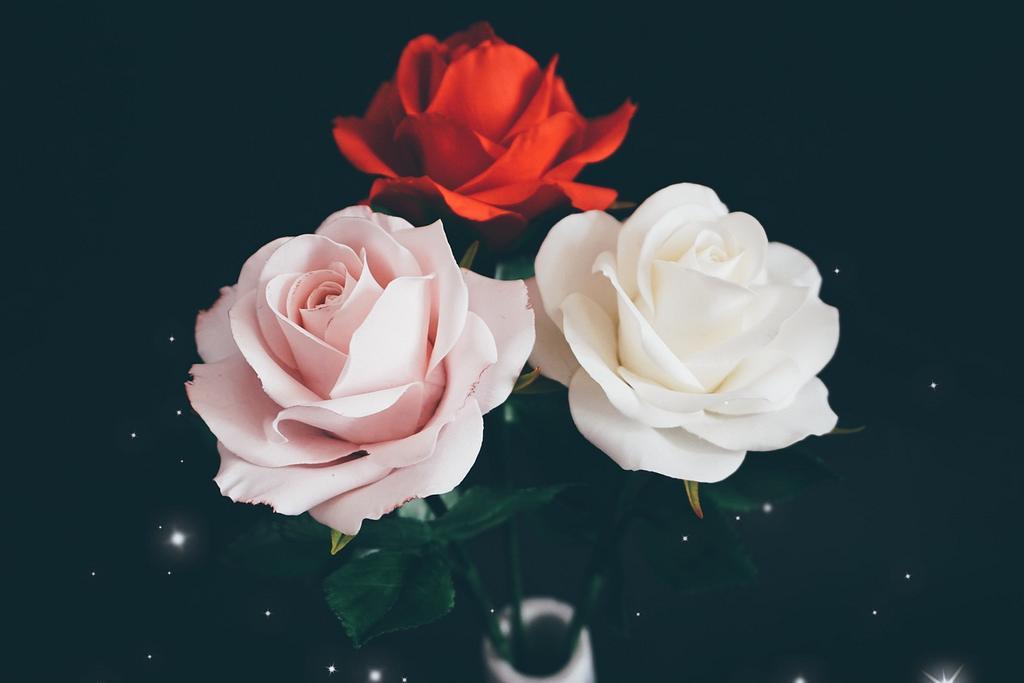 Roses 💐 by Erika Amelia Ersek