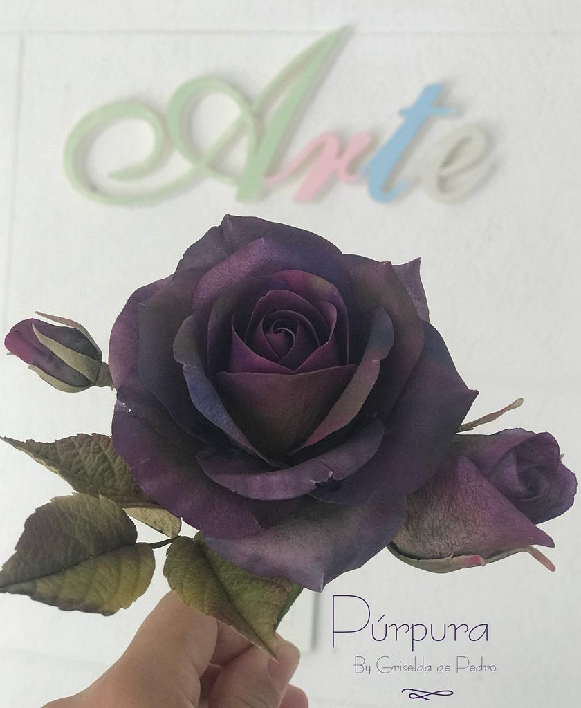 Rosa  Púrpura  by Griselda de Pedro