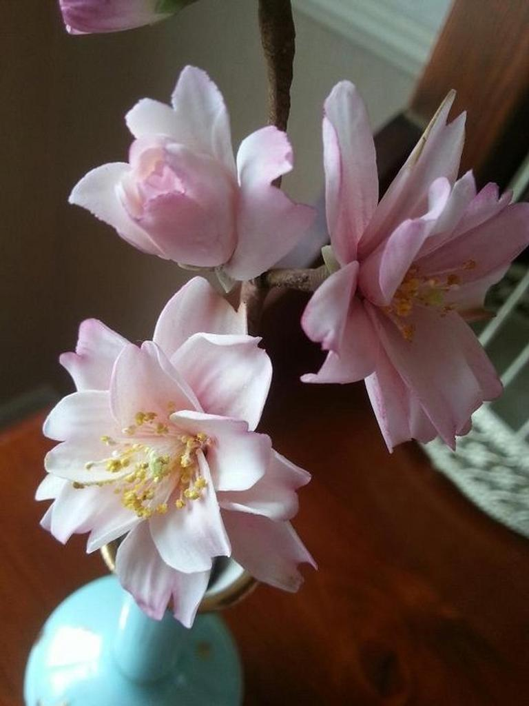 Sugar Cherry blossoms by La Lavande Sugar Florist