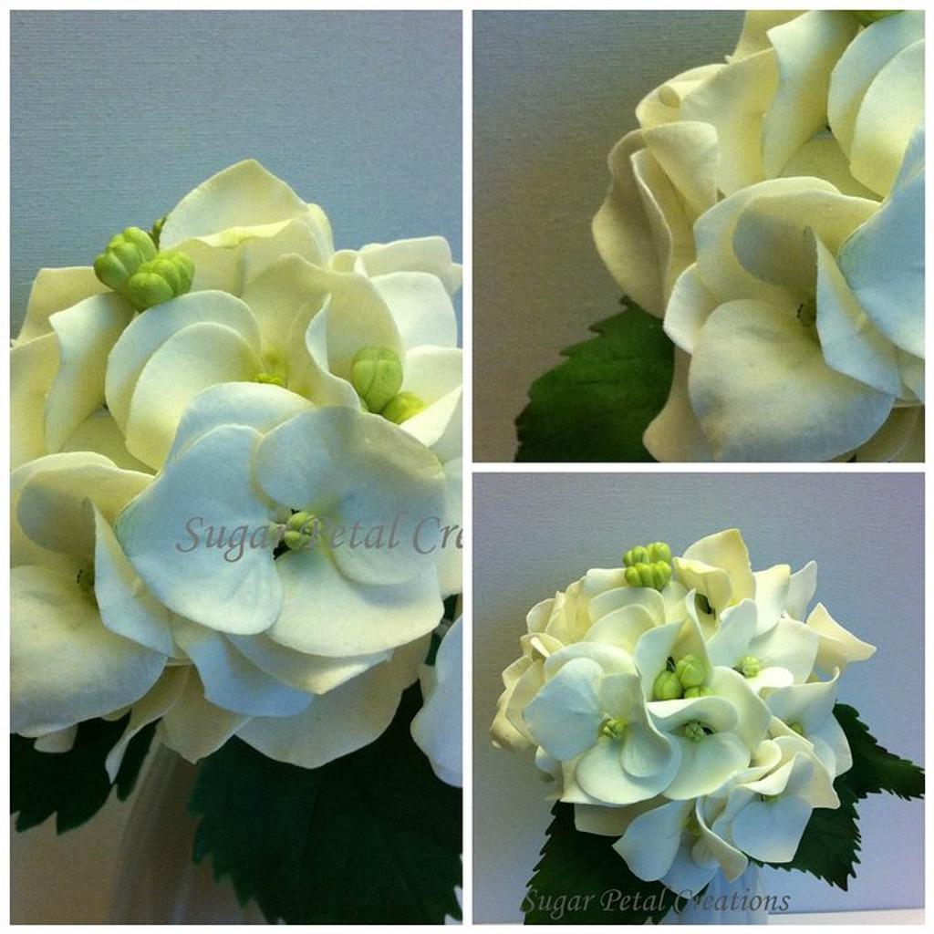 Gumpaste Hydrangea  by Anne Cutajar-Wagner