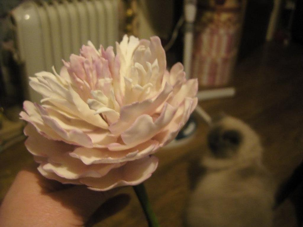 Frilled peony by ladyfaeuk
