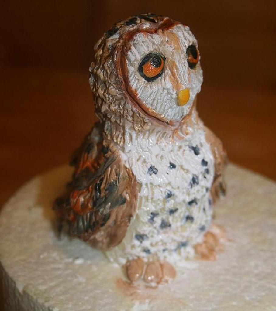 Modeling chocolate barn owl by Stacey Fruchey