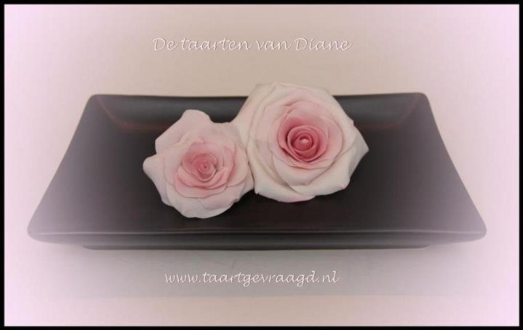 Pink rose by Diane Gunst