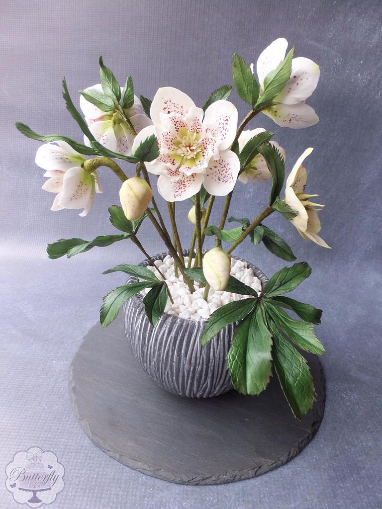 Hellebores - Cake International Silver Award by Butterfly Cakes and Bakes