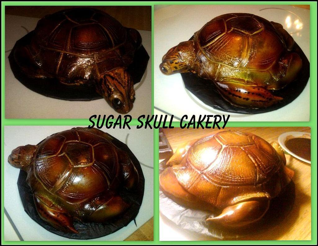 Turtle Cake by Shey Jimenez