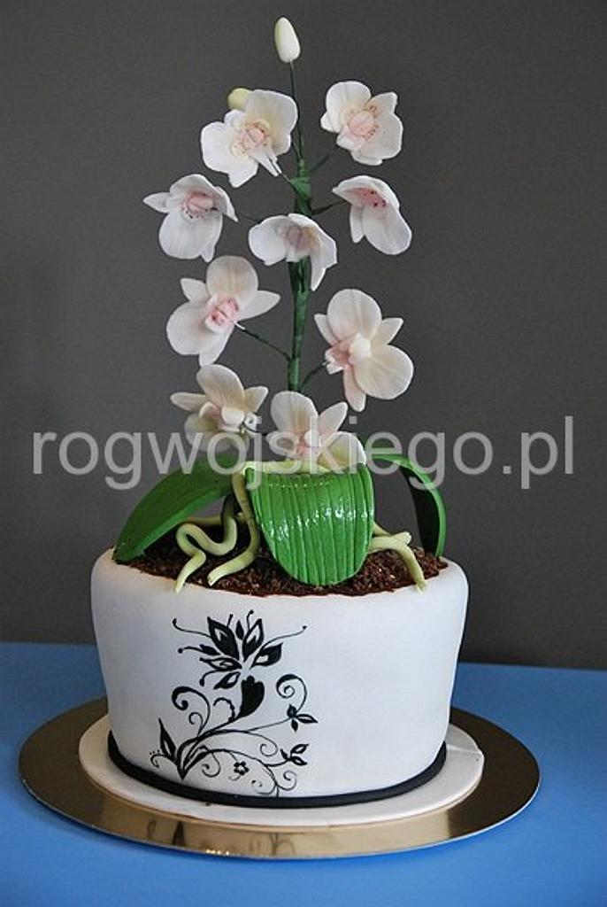 Flower pot with orchids / Tort doniczka z orchideą / storczykiem by Edyta rogwojskiego.pl