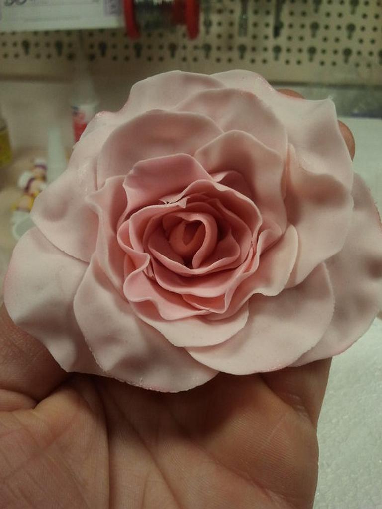 Rose by Samantha