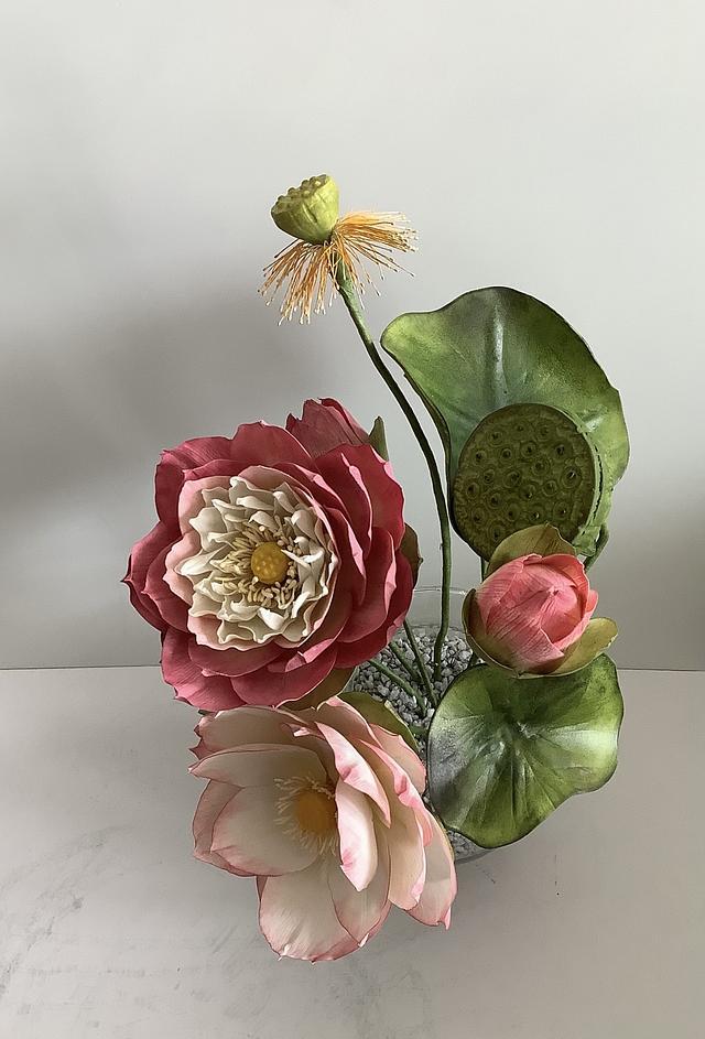 Indian lotus &hybrid lotus