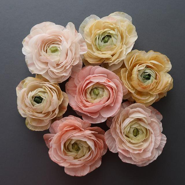 Learn how to create Wafer Paper Ranunculus