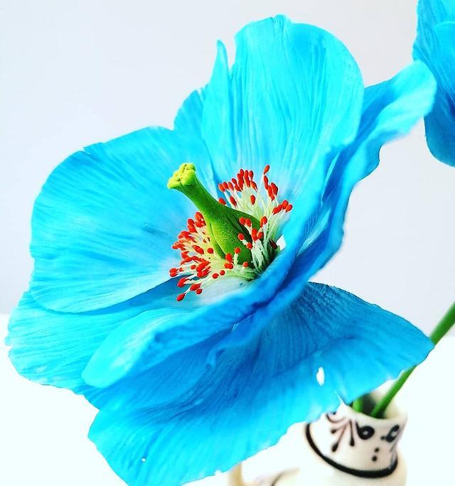 Blue Icelander Poppy
