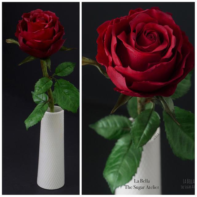 Scarlata sugar Red Rose