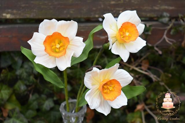 My sugar Daffodils