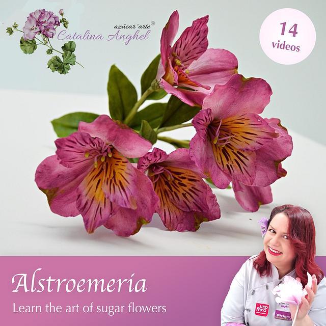 Free-Formed Sugar Alstroemeria