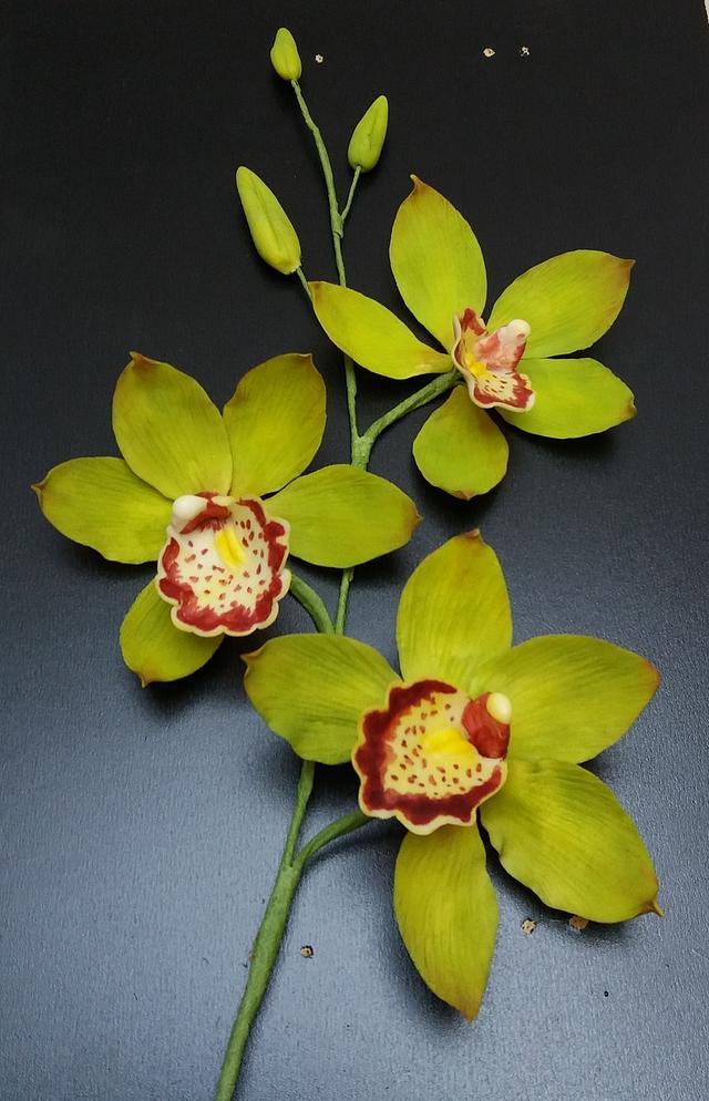 Cattleya orchid branch