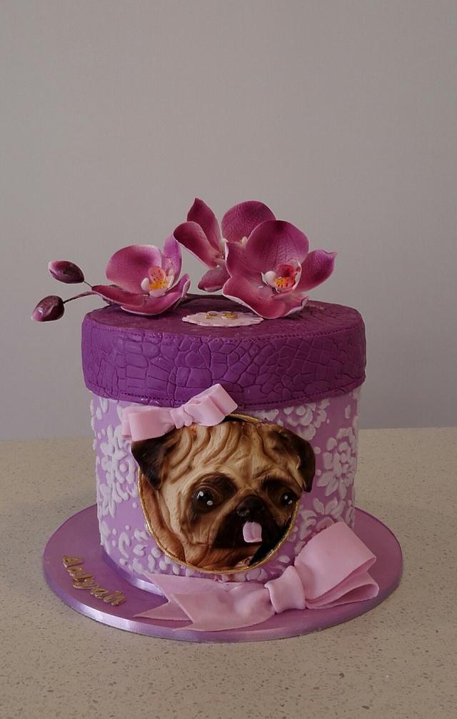 A pug in a box
