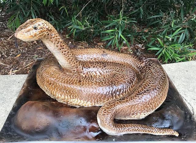 Brown snake in my garden