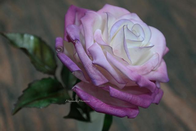 My purple gumpaste rose