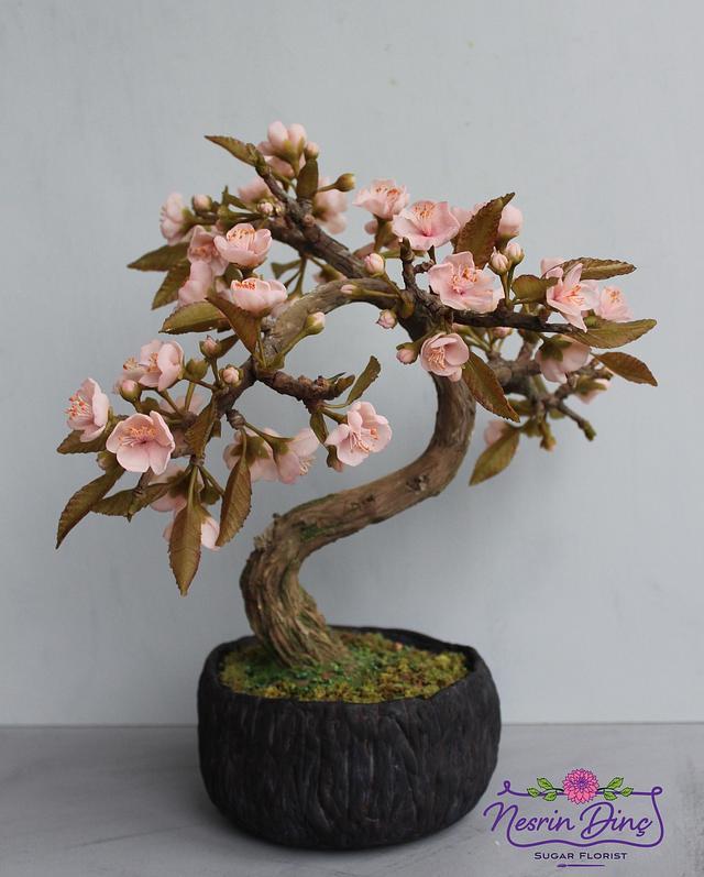 sakura bonsai  japan cake collaboration