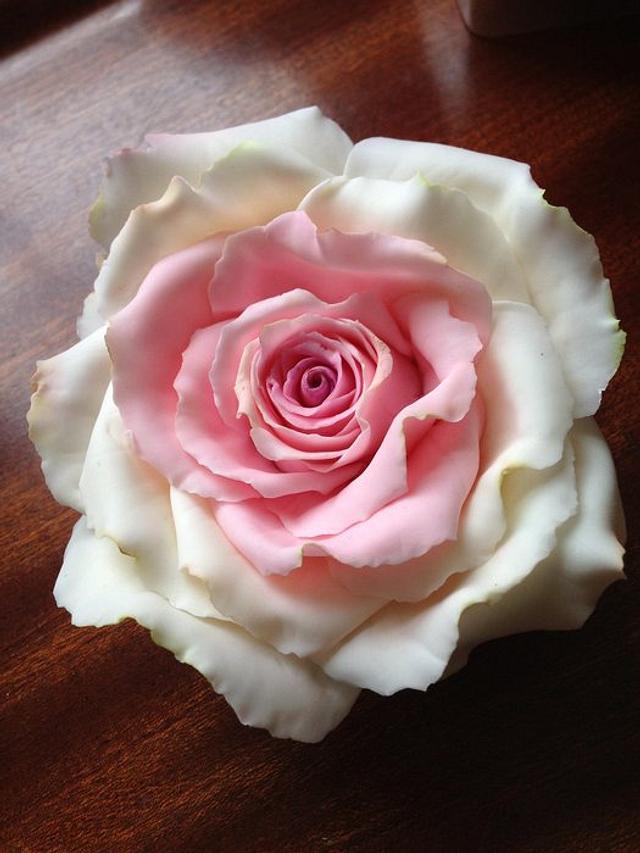Playing with Sugar Pink / white Rose'