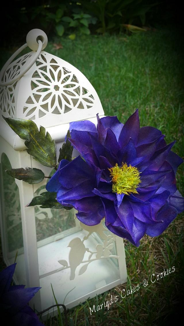 Waffer paper clematis