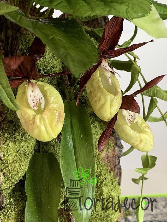 """Happy Woman Slipper"" orchid"