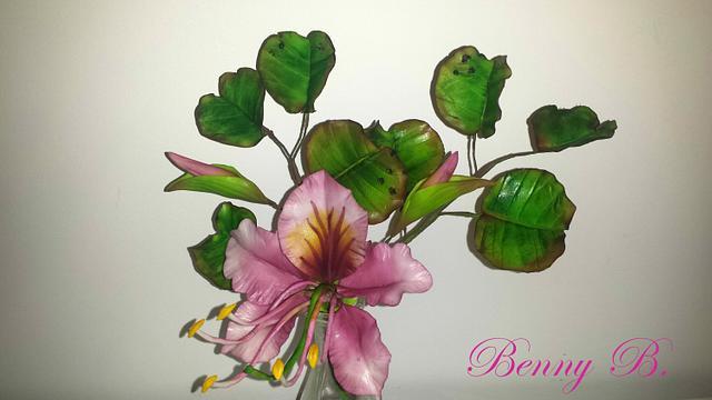 Bauhinia-little tropical beauty