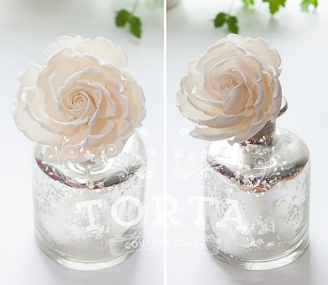 White rose in full bloom