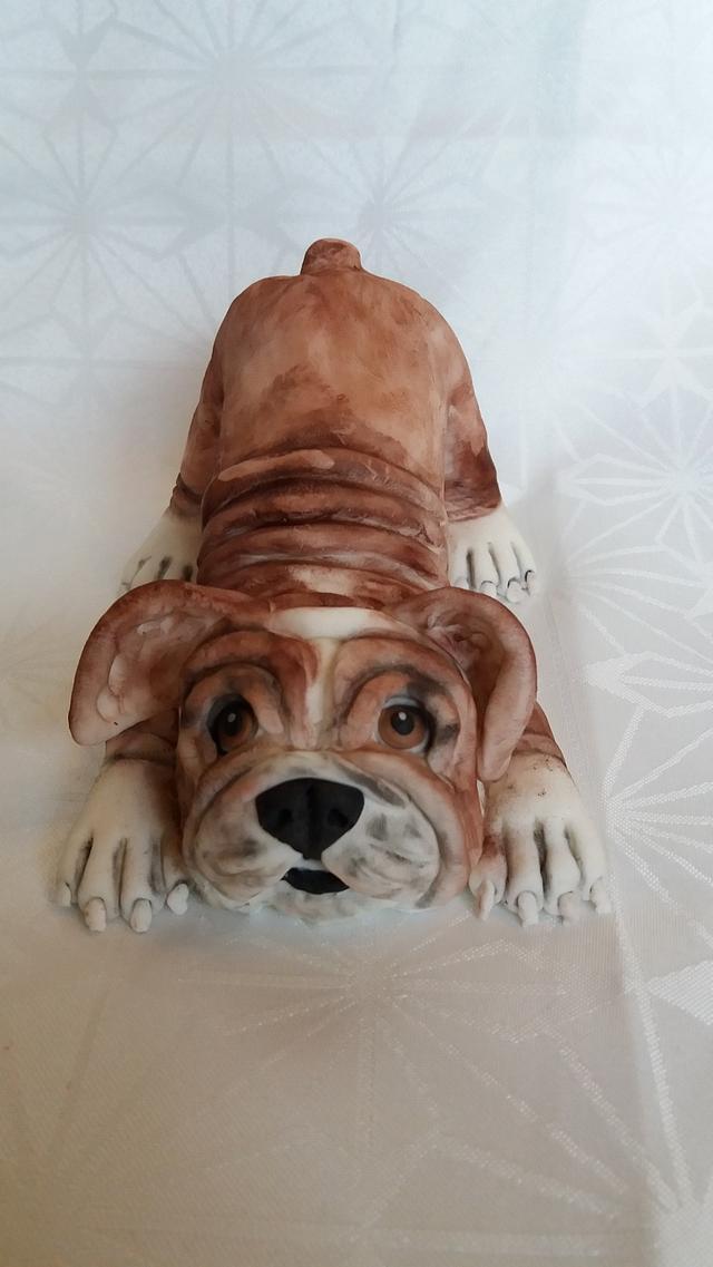 my doggie ❤