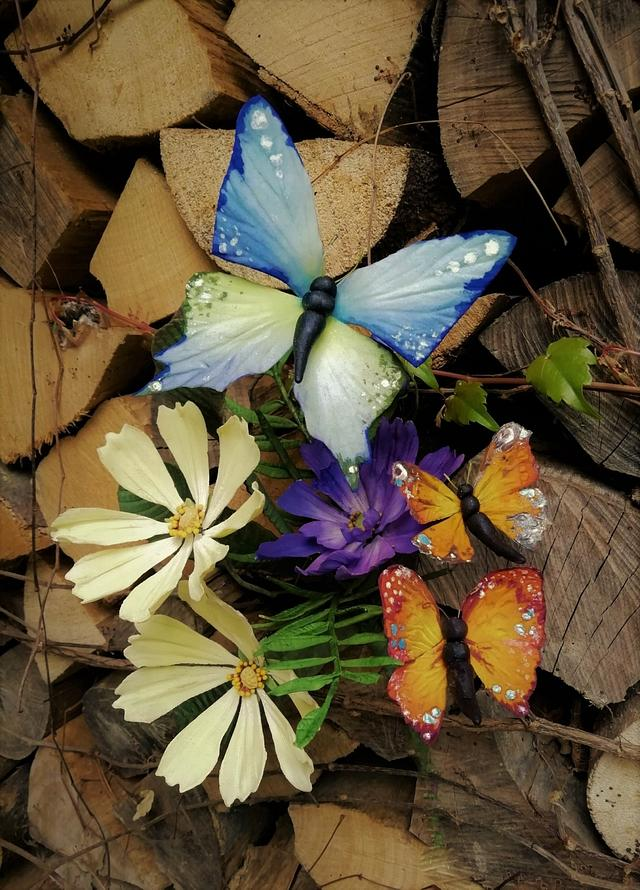 Cosmos flower and butterflies