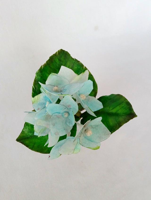 Wafer paper Hydrangea