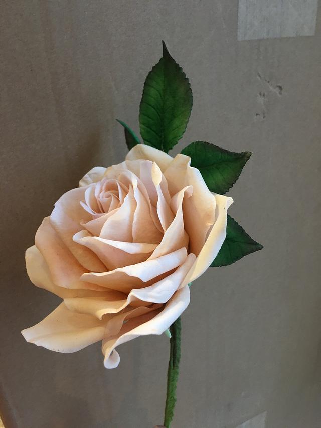 Sugar Rose perfection