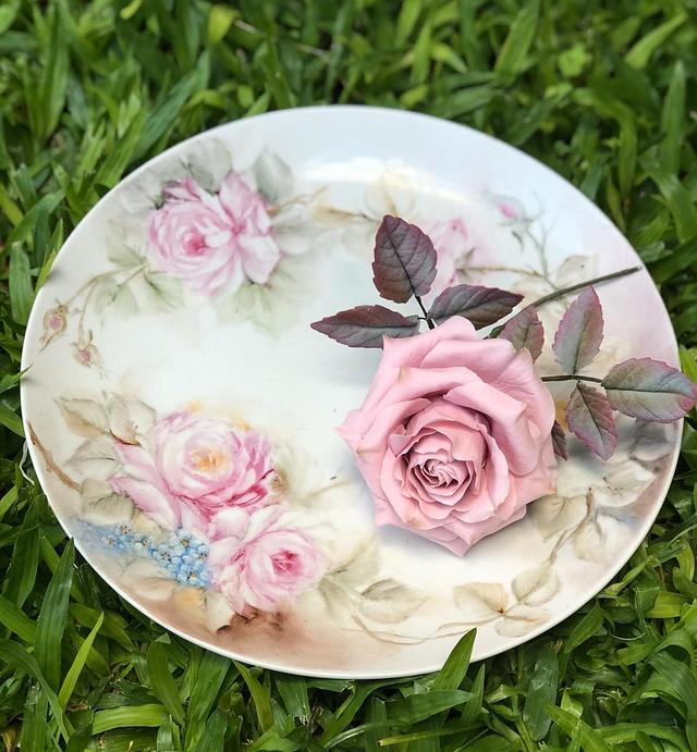 Rosa de Azúcar