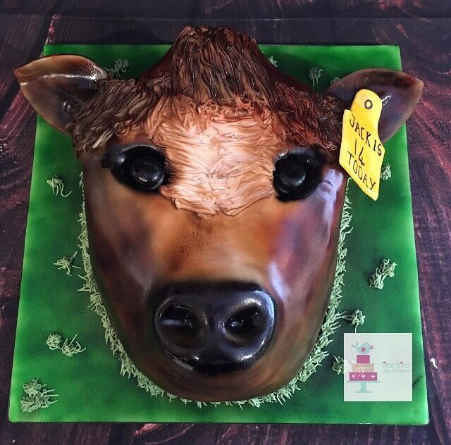 Shorthorn cattle head