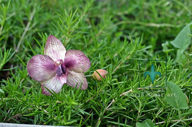 orchid july