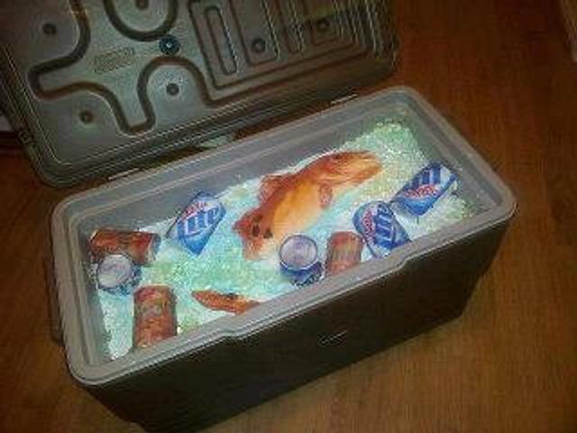 Beer & Fish
