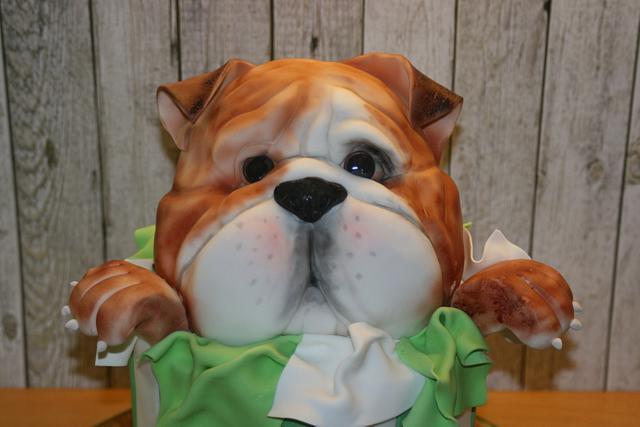 Ted the bulldog