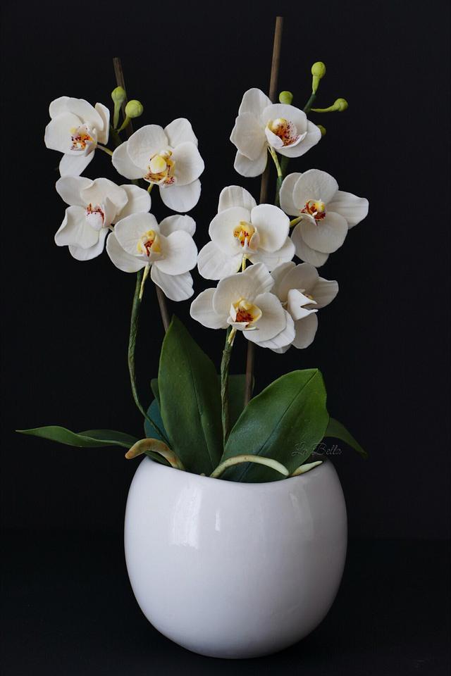 Gumpaste White orchid