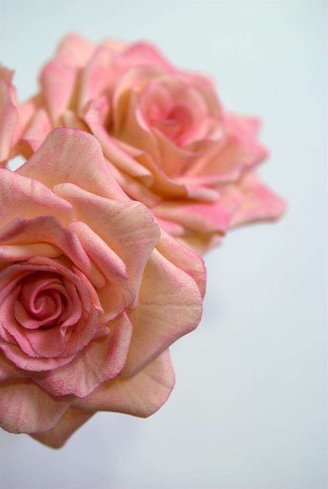 English rose ombre