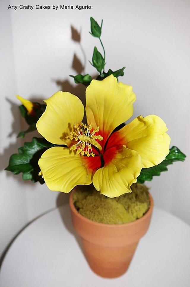 Hibiscus sugar flower