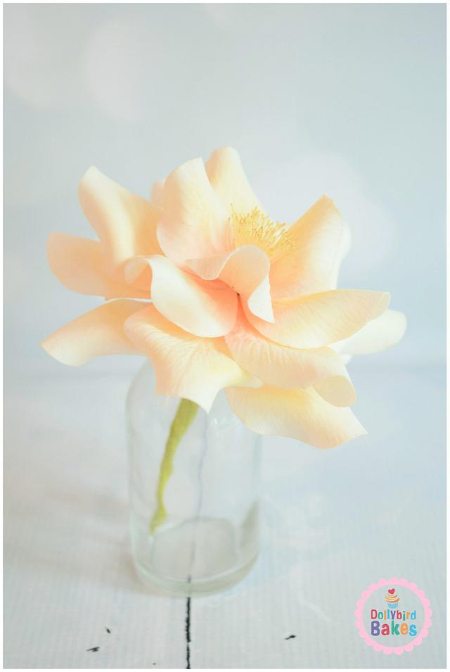 Open Garden Rose