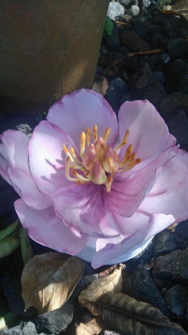 Wafer Paper Peony Flower