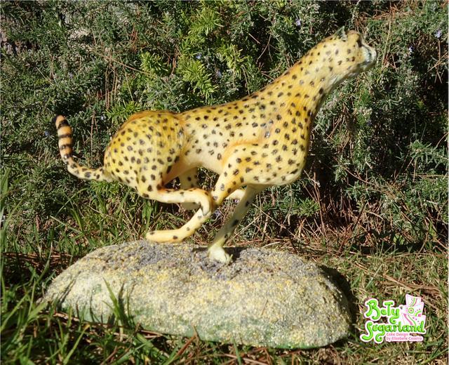 Cheetah - Animal Rights Collaboration