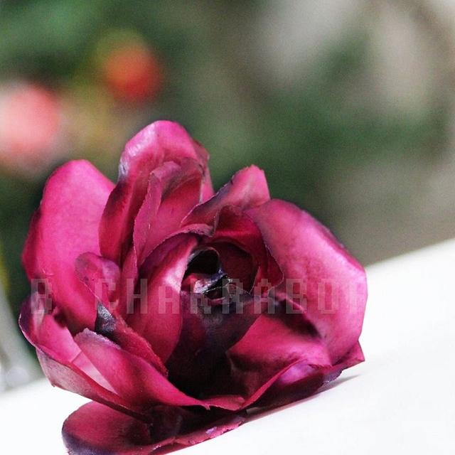 Wafer Paper Rose By Purbaja B Chkraborty