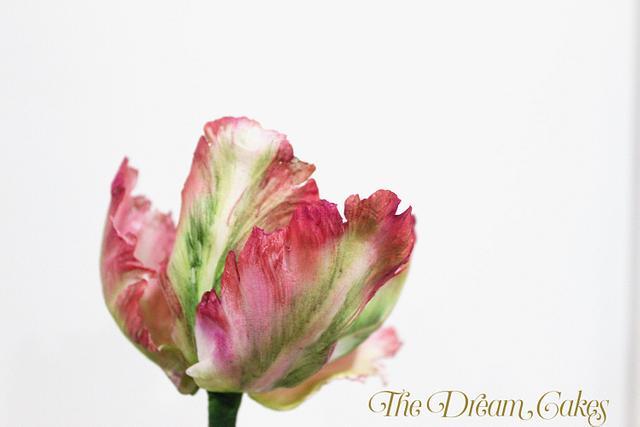 Gumpaste Parrot Tulips