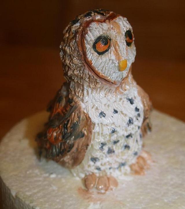 Modeling chocolate barn owl