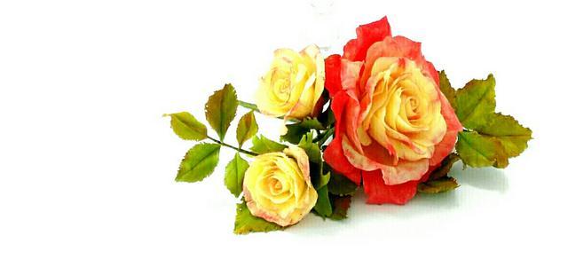 Symphonie Lumière Rose