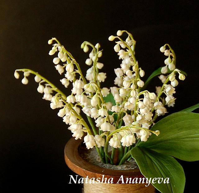 Sugar lily of the valley